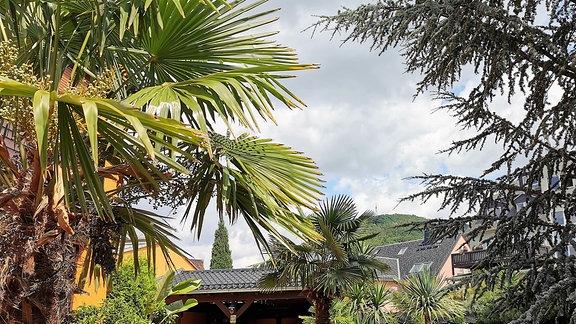 Vickys Gartenparadiese - Palmengarten