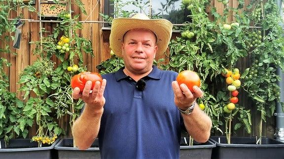Vickys Gartenparadiese - Tomatengarten