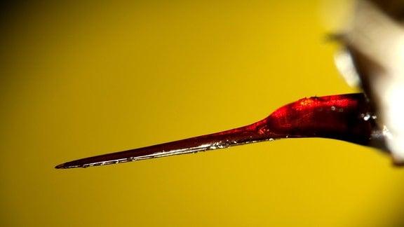 Stachel einer Europäischen Honigbiene