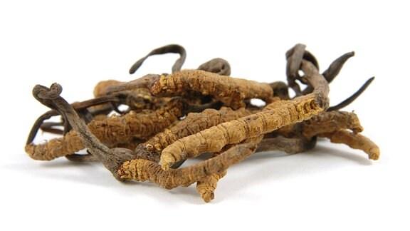 Chinesischer Raupenpilz (Cordyceps sinensis)