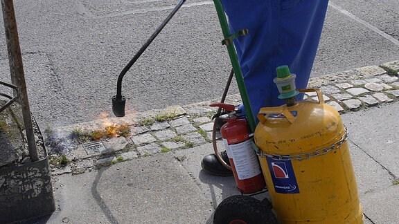 Pflanzen an einem Gehweg werden 2010 abgebrannt.