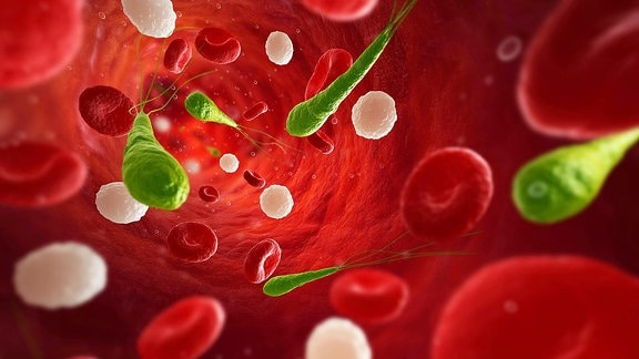 Symbolbild Bakterien im Blut