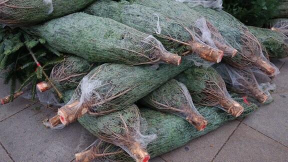 frisch geschlagene Weihnachtbäume  im Netz