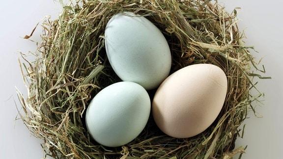 Bio-Eier aus Freilandhaltung