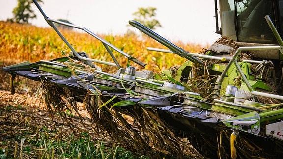 Maishäcksler auf einem Feld
