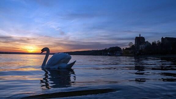 Sonnenuntergang am süßen See mit Schwan im Vordergrung