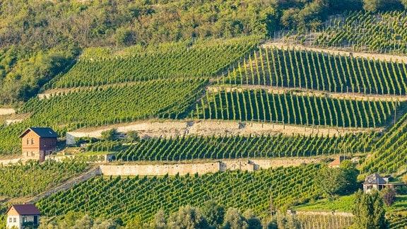 Blick auf ein Weinanbaugebiet im Sonnenschein bei Naumburg im Süden Sachsen-Anhalts