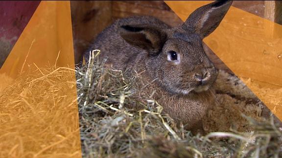 Kaninchen Blümchen