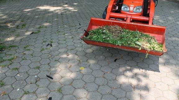 Krähenfedern auf Boden, daneben ein Tieflader mit Grünschnitt.