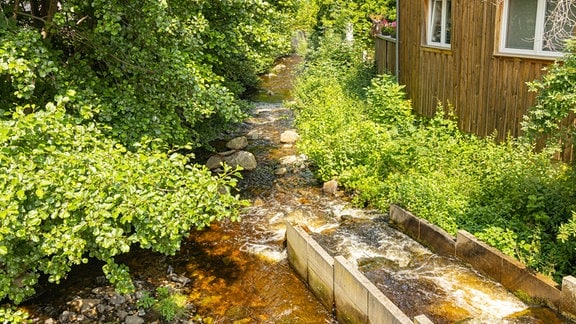 Die Holtemme in Wernigerode, zu sehen ist eine Fischtreppe im Grünen.