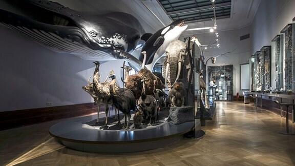 Ausgestopfte Tiere im Museum