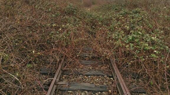 Mit Gestrüpp überwucherte Bahngleise.