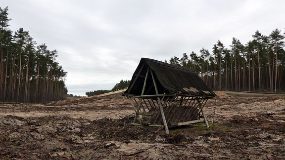Futterkrippe in Schneise im Wald