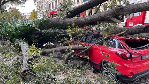 Ein umgesstürzter Baum fällt in Görlitz auf ein rotes Auto. Bei dem Auto entsteht Totalschaden