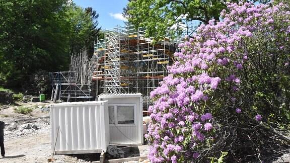 Blütenbüsche, Baucontainer vor Rakotz-Brücke
