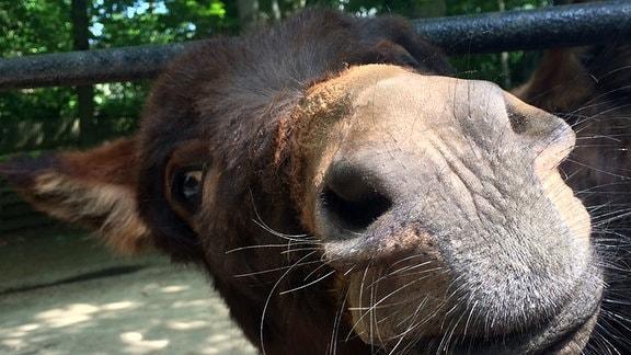 Eindrücke Tierpark Geithain