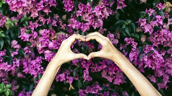 Frauenhände formen ein Herz vor rosa Blumenblüten