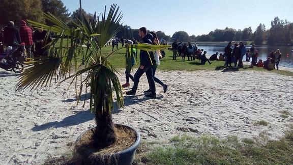 Eine Palme in einem Topf neben einem Sandweg zum Ufer eines Sees.