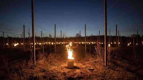Feuer zeichnen sich ab am Weinberg von Schloss Wackerbarth in Weinboehla