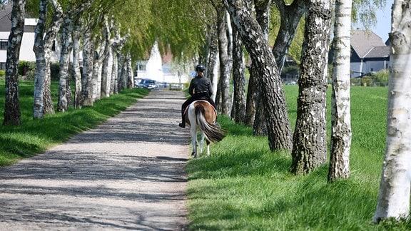 Reiterin mit Pferd auf einem Feldweg