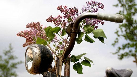Fahrradlenker geschmückt mit einem Zweig Flieder