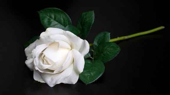 Weiße Rosen vor dem Schriftzug Dresden. Bildbeschriftung: Gedenken in Dresden: Nachrichten, Bilder und Hintergründe