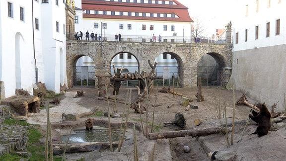 Bärengehege an Schloss Hartenfels in Torgau