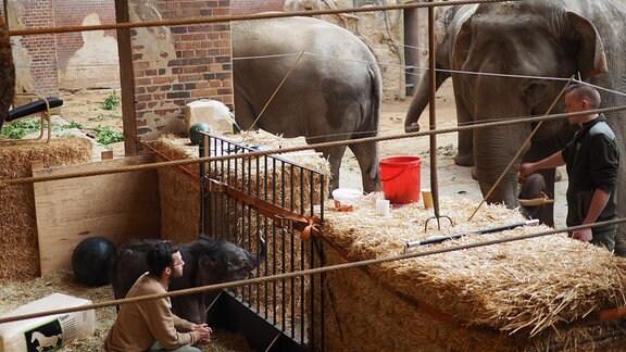 Ein Elefantenbaby steht mit Pflegern und drei weiteren Elefanten in einer Anlage des Leipziger Zoos