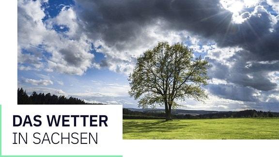Das Wetter in Sachsen