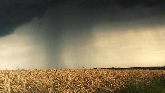 bunter Regenschirm im Getreidefeld bei aufziehendem Gewitter