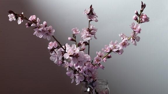 Kirschzweige