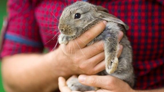Junges Kaninchen von Mann gehalten