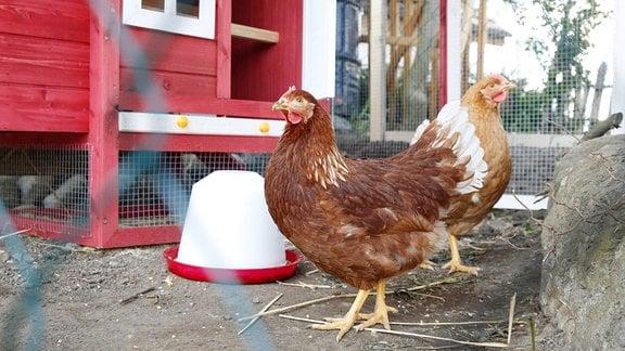Hühner vor einem Hühnerstall