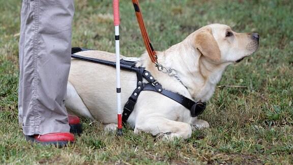 Blindenhund neben blinder Person