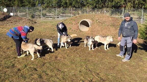 Fünf Huskys und drei Menschen auf einer Wiese