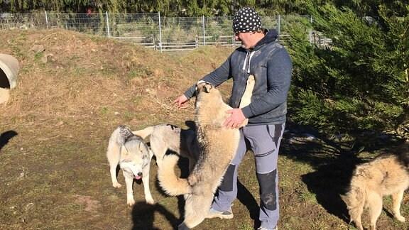 Thorsten Rex mit mehreren Huskys
