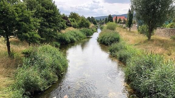 Ein Fluss auf dem mehrere Schwäne schwimmen