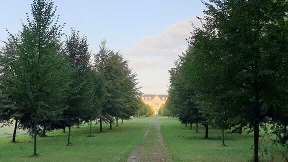 Eine Baumallee mit Blickachse auf ein Schloss in der Abendsonne.
