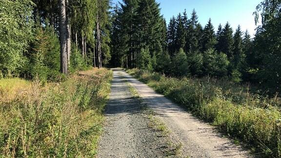 Ein geschotterter Waldweg.