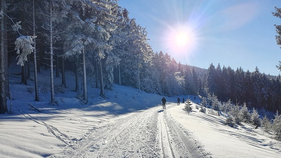 Ski-Langläufer in Loipe bei Sonnenschein und Schnee im Thüringer Wald