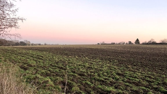 Blick über ein weites Feld, die sogenannte Weinteichsenke nahe Markkleeberg.