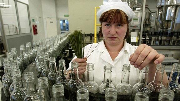 Mitarbeiterin gibt den für Zubrowka-Wodka charakteristischen Bison-Grashalm während der Abfüllung hinzu