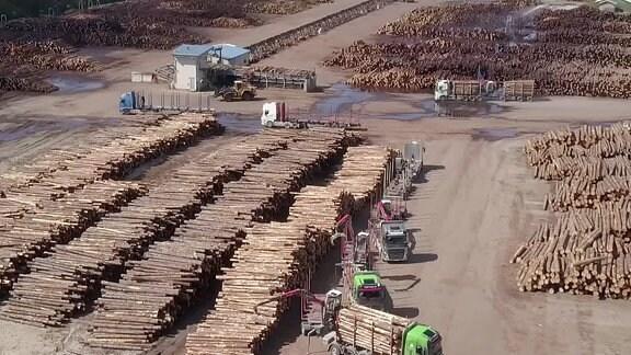 Tausende aufgeschichtete Holzstämme auf dem Gelände einer Holfverarbeitungsanlage.