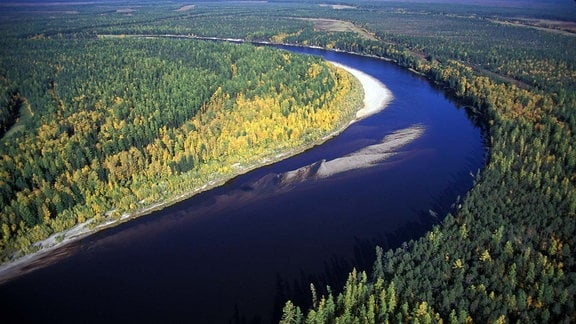 Luftaufnahme: Fluss in Wald