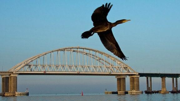 Ein Kormoran fliegt vor einer Brücke