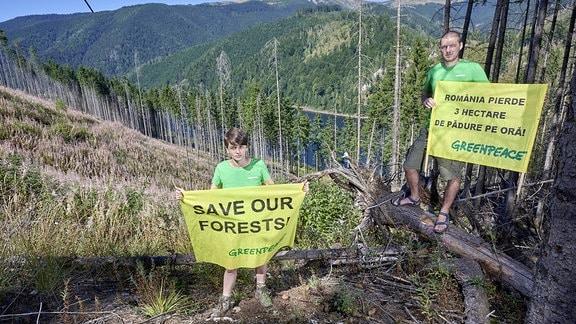 Greenpeace Aktivisten am Rande eines abgeholzten Waldes in Rumänien