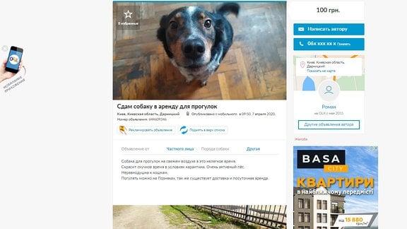 Annonce zum Mieten eines Hundes zum Gassi Gehen