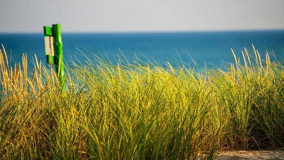 Düne mit Strandhafer und Schild