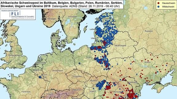 Verbreitung der Afrikanischen Schweinepest im Baltikum, Belgien, Bulgarien, Polen, Rumänien, Serbien, Slowakei, Ungarn und Ukraine 2019