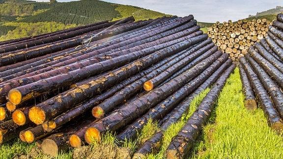 Geschlagene Bäume liegen gestapelt und werden bis zur Weiterverarbeitung beregnet.